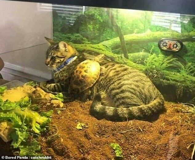 Кот уснул в террариуме.