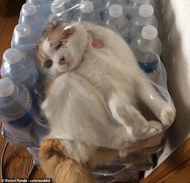 Кошка застряла под пленкой.