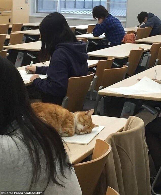 Кот спит на тетрадке.