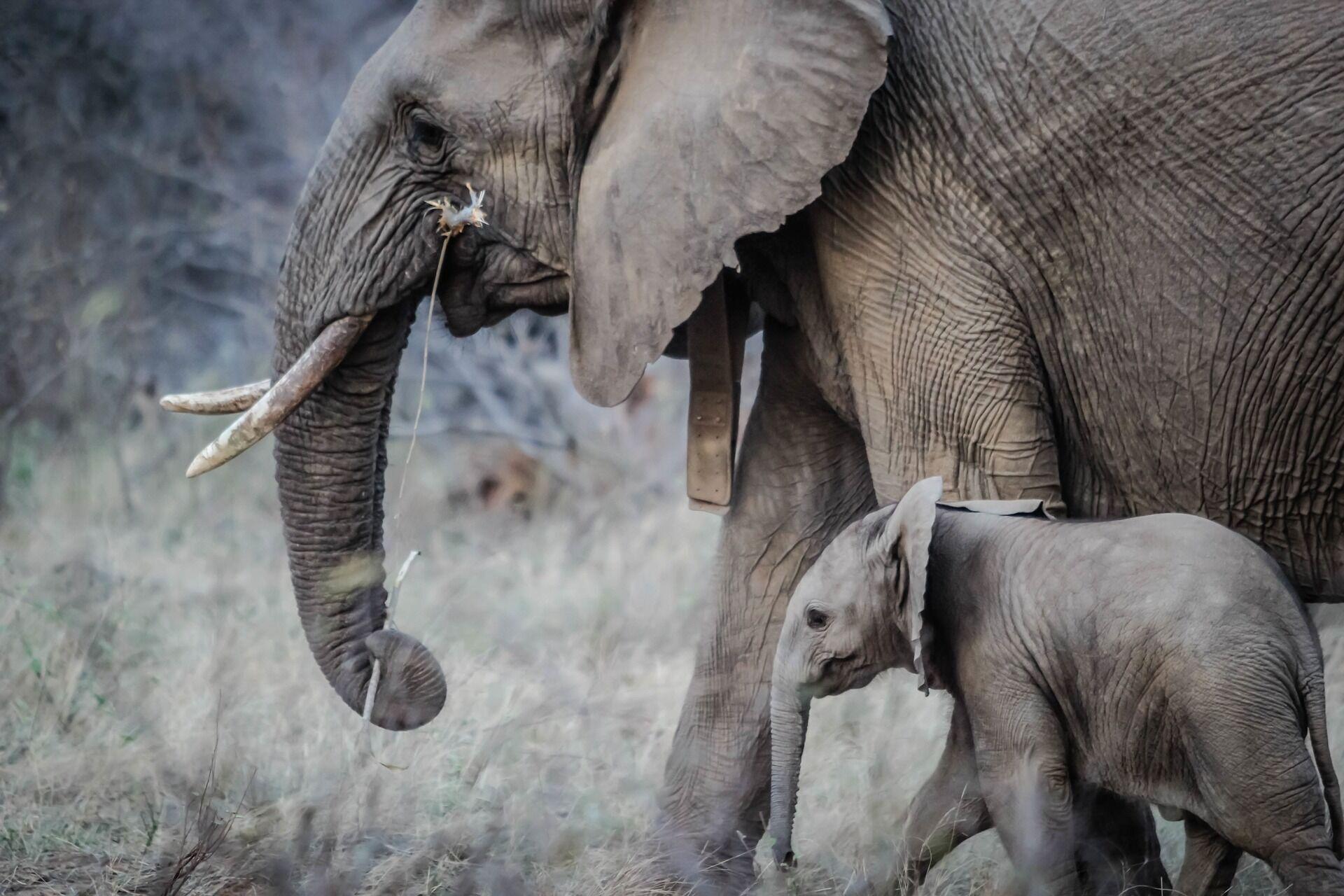 Посмотреть на диких животных можно в Кении, Танзании, Ботсване, ЮАР и Намибии