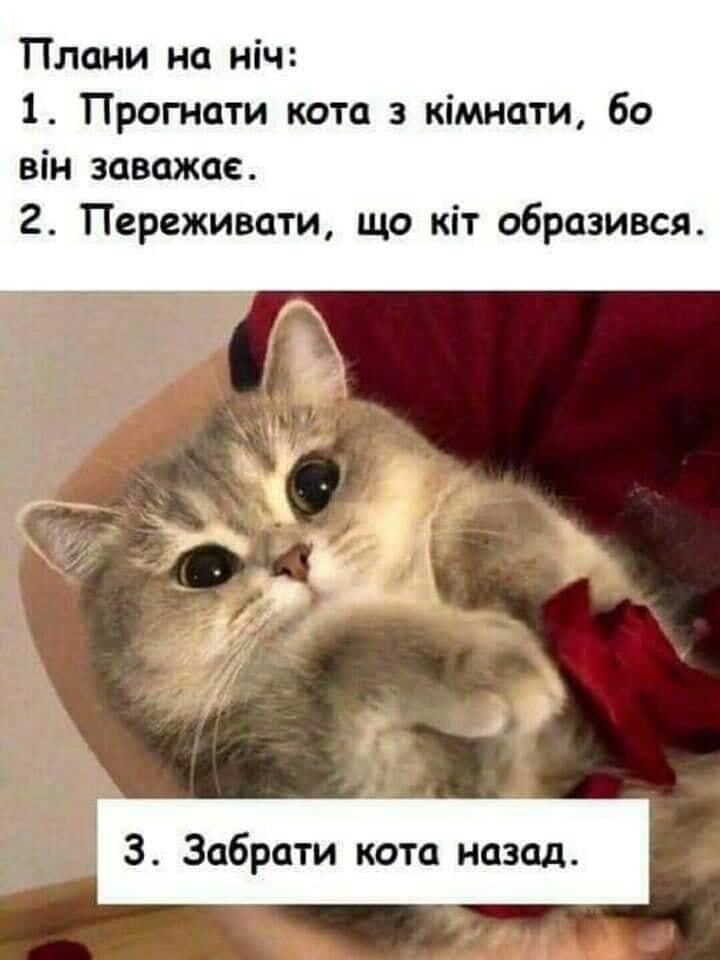 Мем о коте