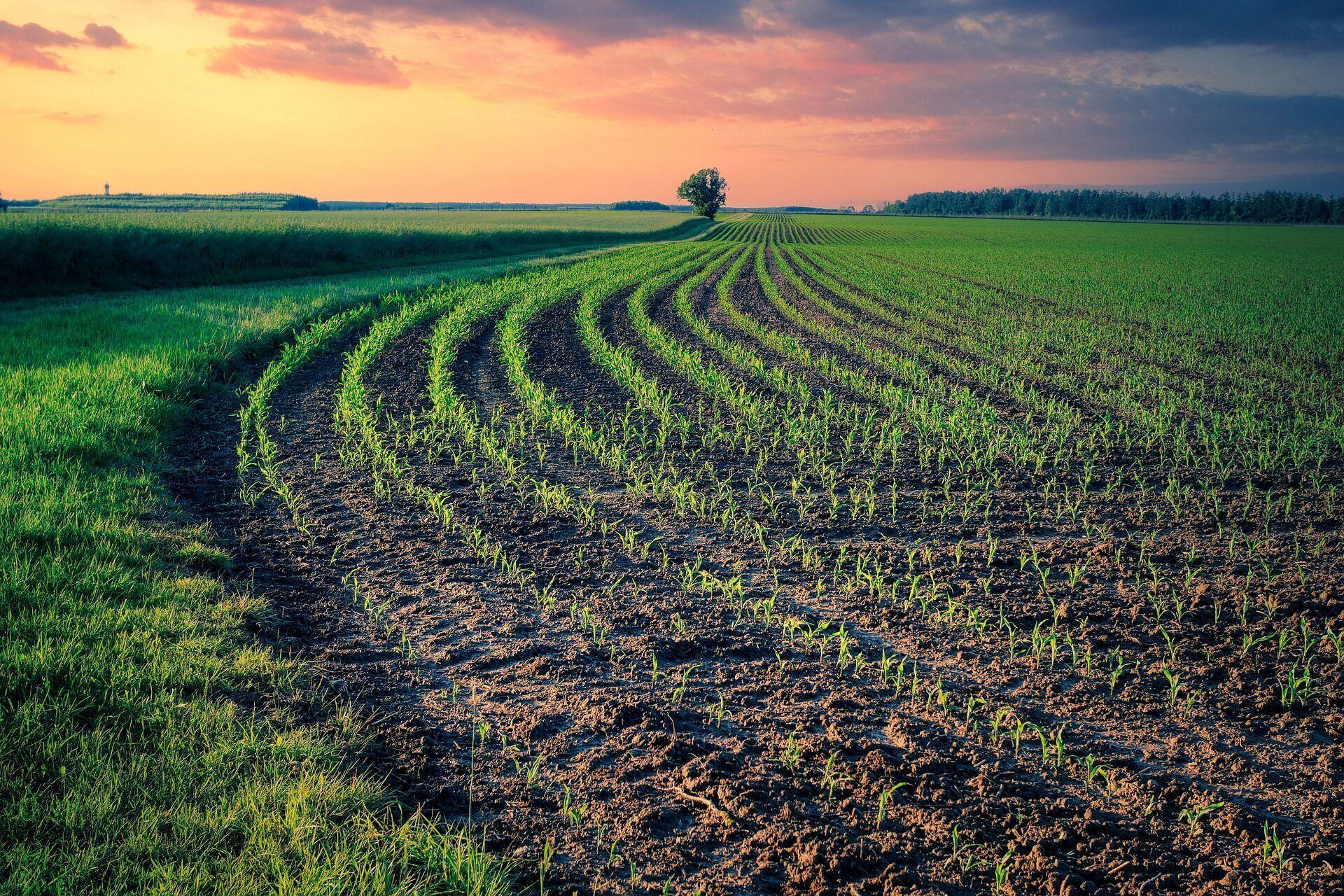 Починаючи з Благовеста в селах починають сіяти ранні ярі зернові