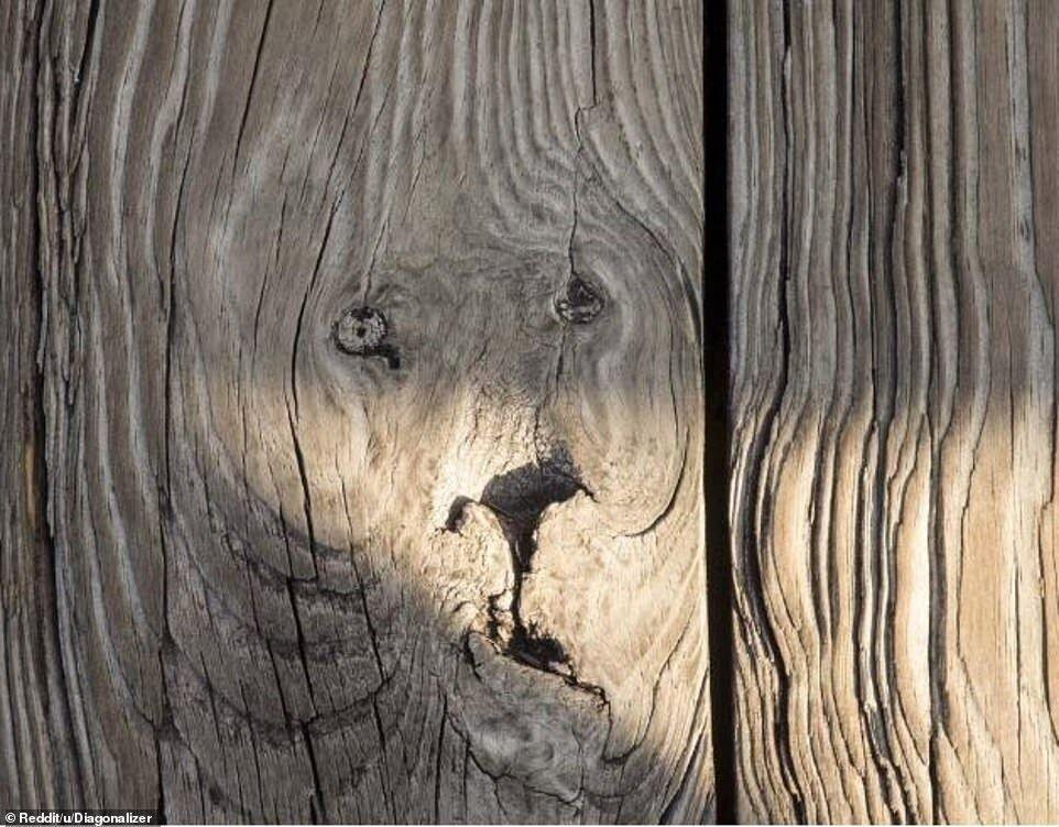 """Мордочка"" лева на дереві"