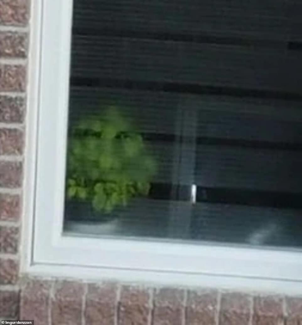 Квітка в горщику стежить за людьми через вікно