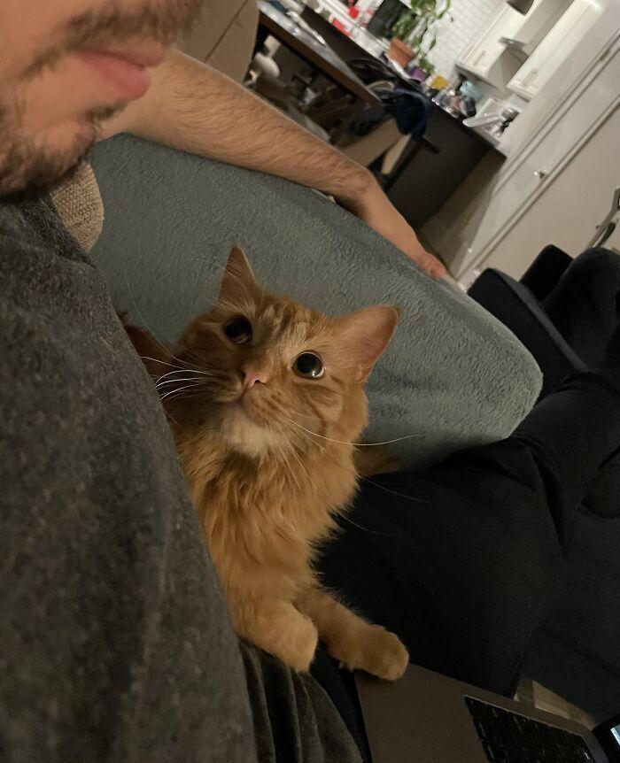 Найзакоханіша кішечка в світі