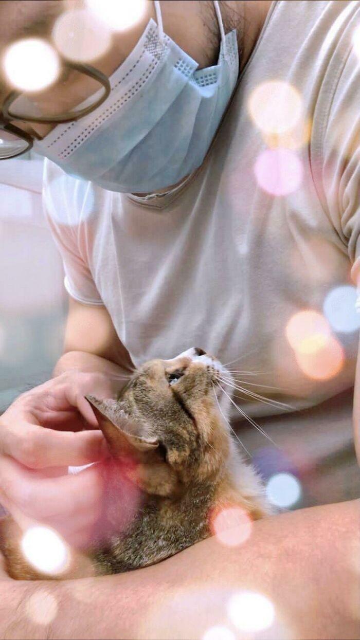 Кішечка підтримує господаря
