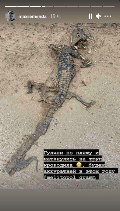 В Кирилловке нашли труп крокодила
