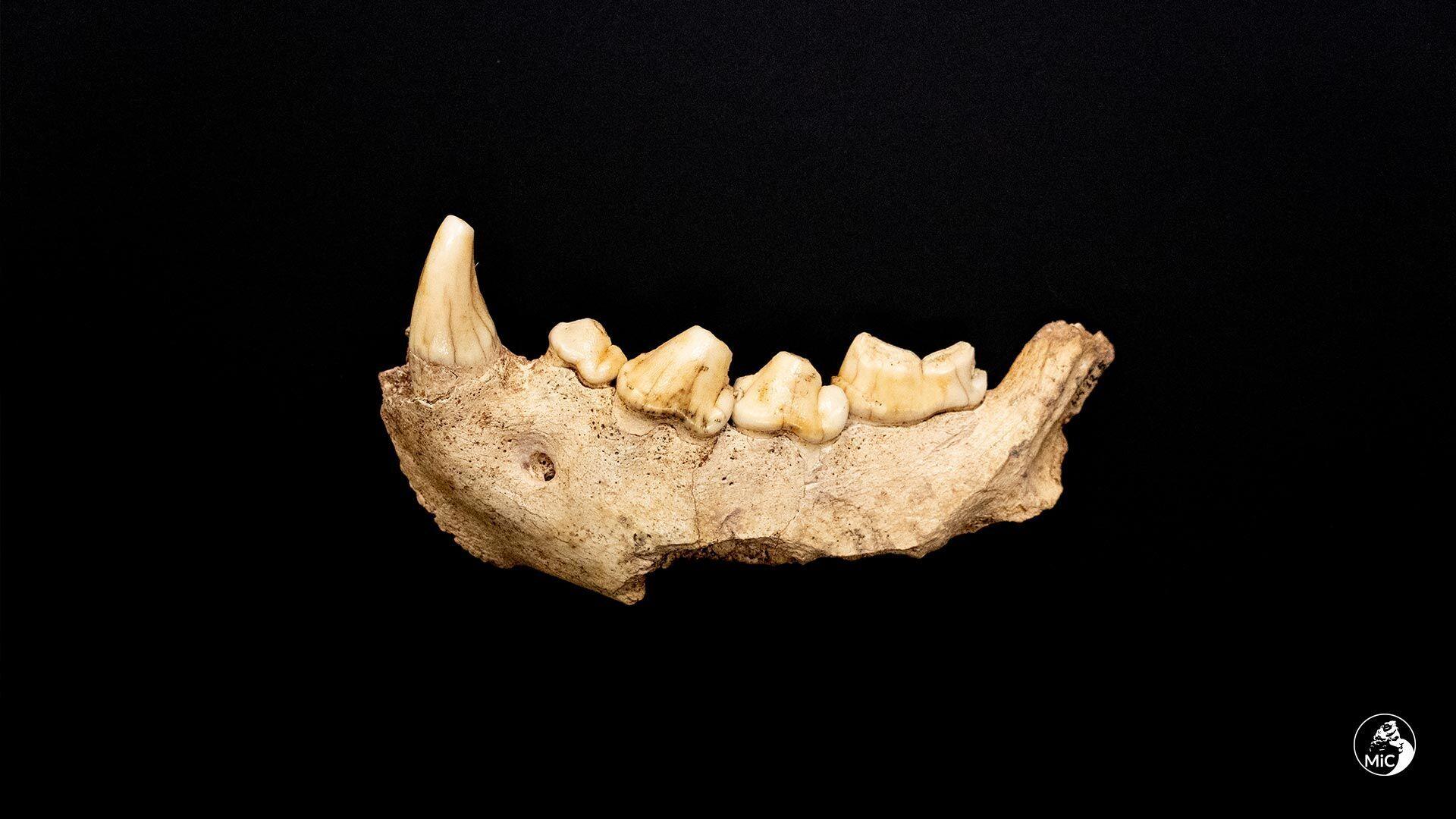 Один из найденных неандертальцев жил около 100 тысяч лет назад