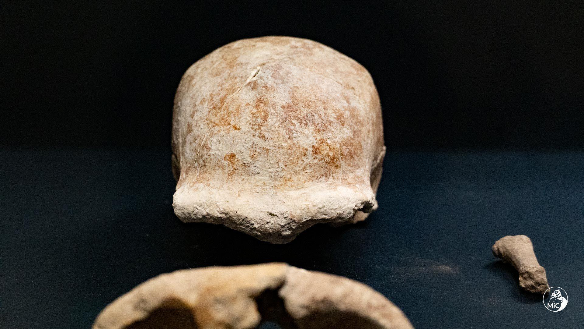 Фрагменты скелетов неандертальцев
