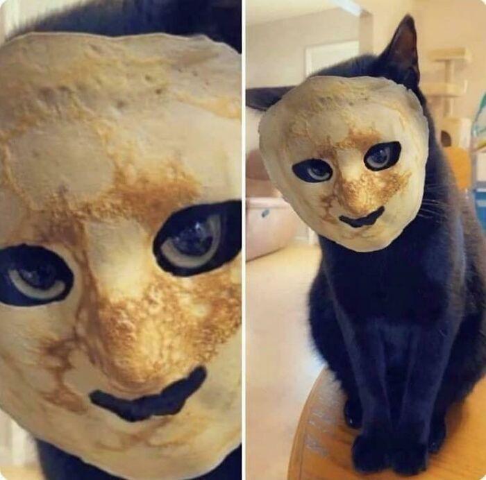 Кіт приміряє маску з тепленького млинця