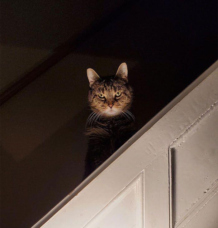 Кіт готується до нападу