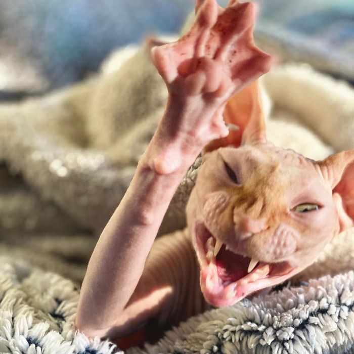 Кіт незадоволений, тому що його розбудили
