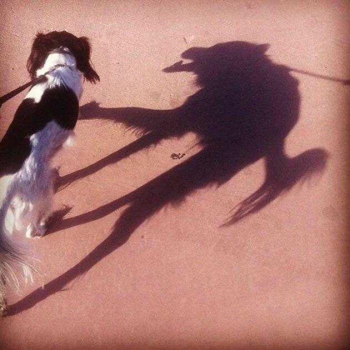 Тінь собаки схожа на страшну гієну