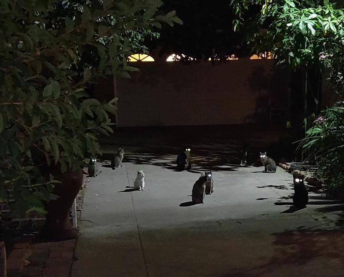Коти лякають перехожих вночі