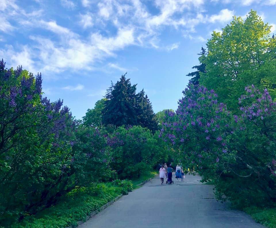 З саду бузків відкриваються мальовничі панорами міста