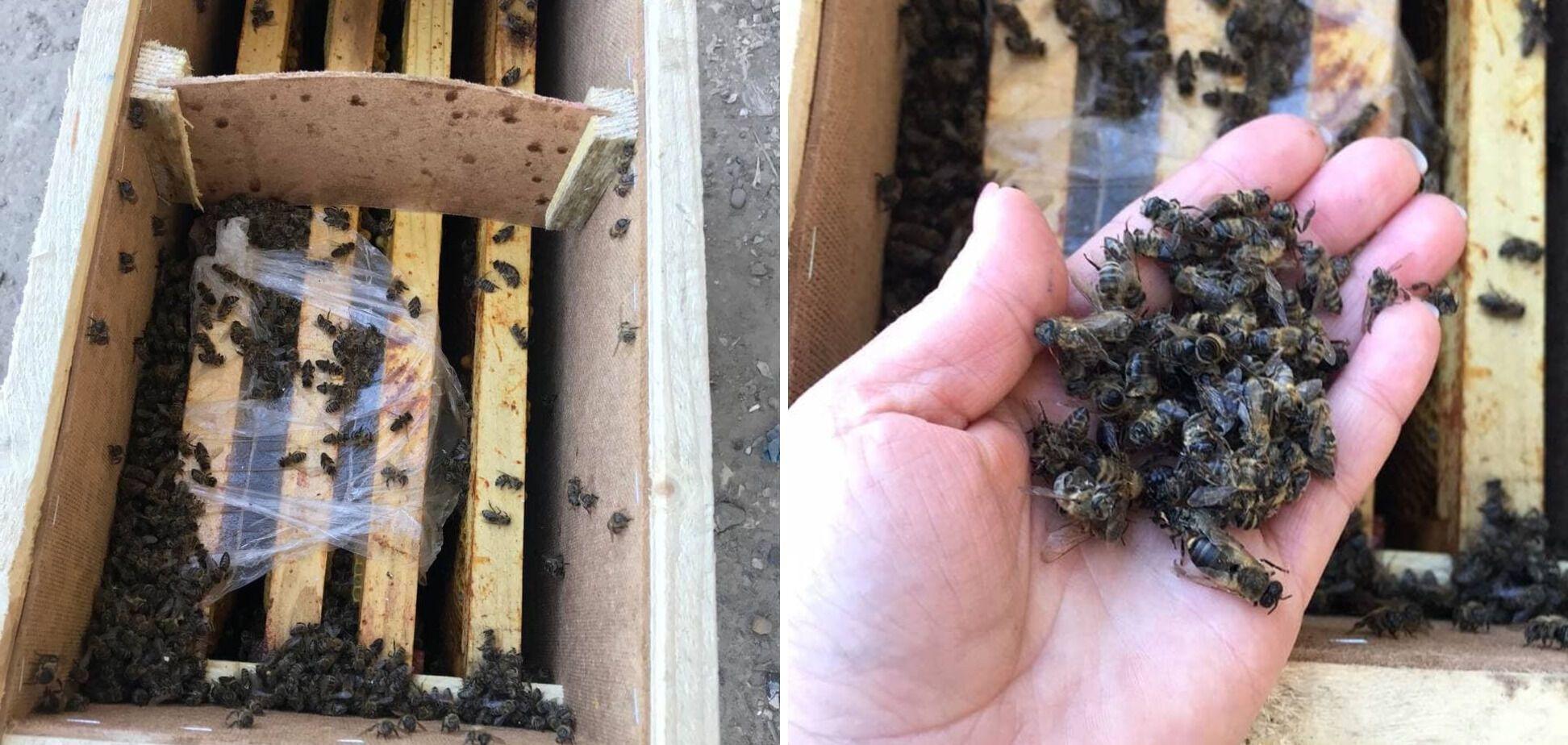 Пчеловоды понесли убытки на 500 тыс. грн