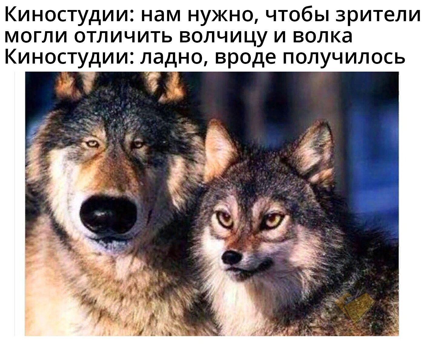 Мем о кино