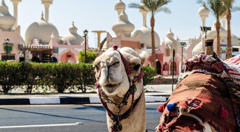 Египет готовится к приему российских туристов