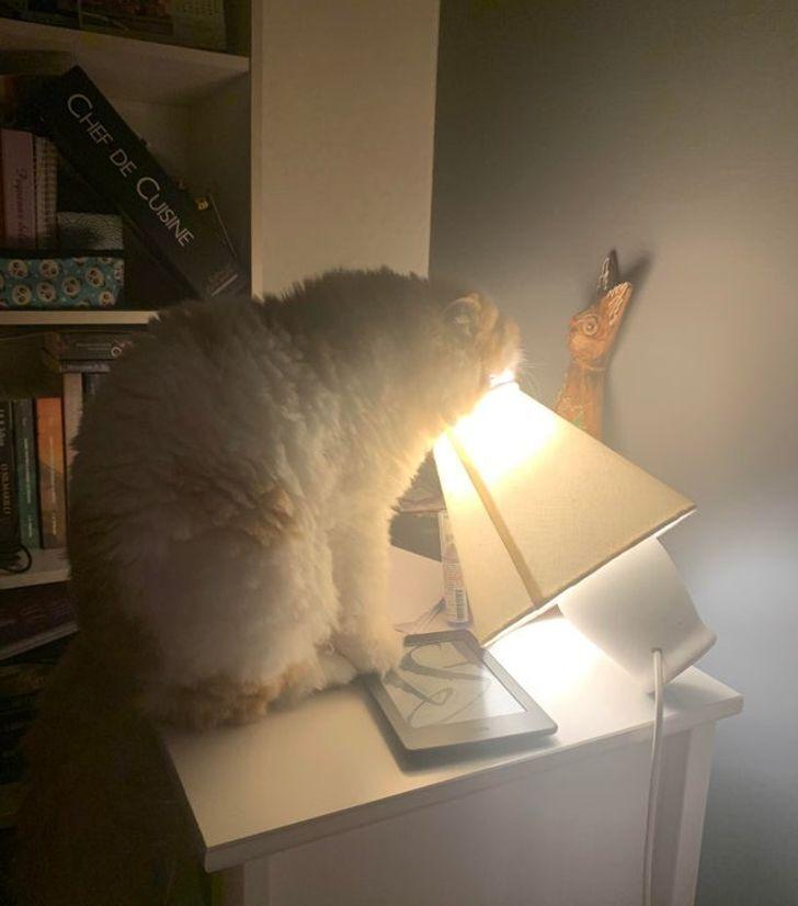 Кіт ледь не обпік мордочку гарячою лампою.