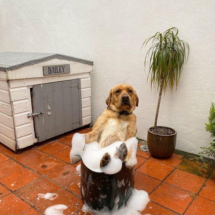 Пес влаштував баню у відрі для миття підлоги