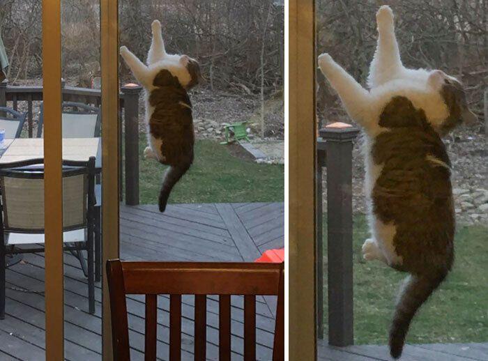 Кіт намагається пробратися в середину