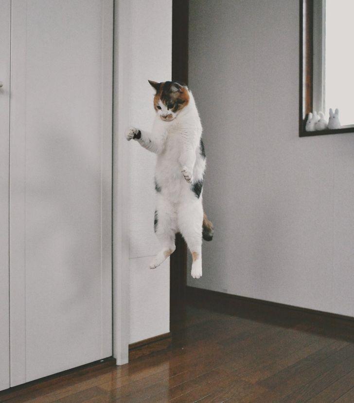 Кіт навчився літати