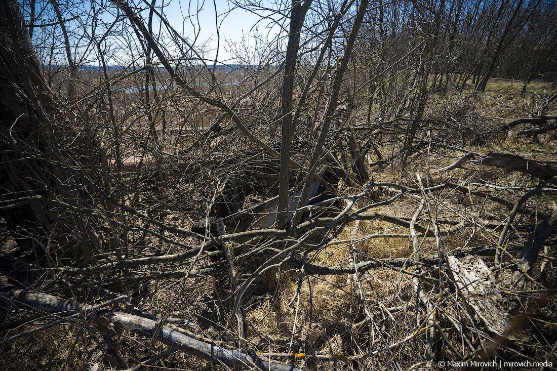 На фото можно увидеть, где ранее проходило дно, – там остался песок, который сейчас зарастает деревьями и мелкими кустарниками