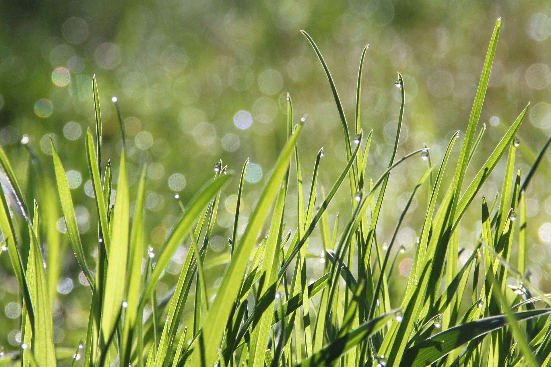 Много росы – к хорошей погоде, очень мало – к дождю