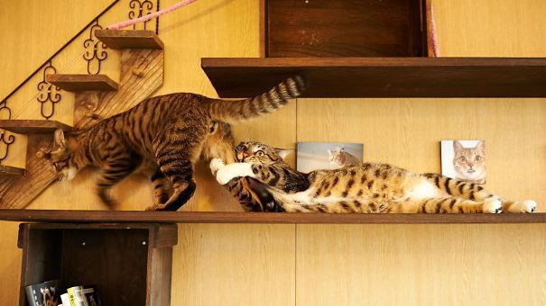 Кот не хочет оставаться в одиночестве.