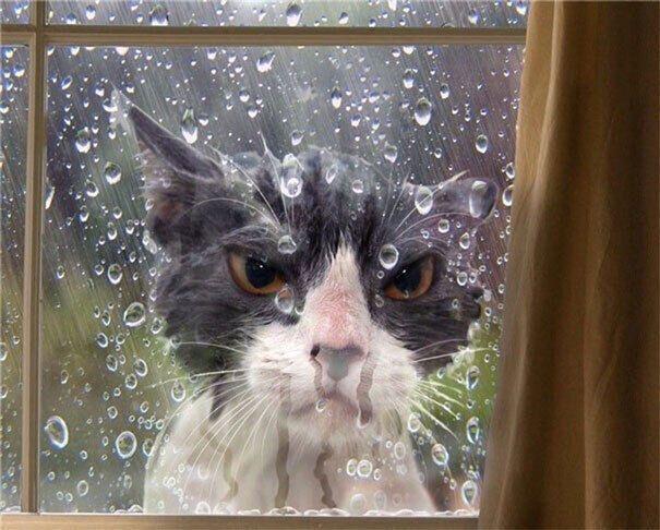 Котику не нравится погода за окном.