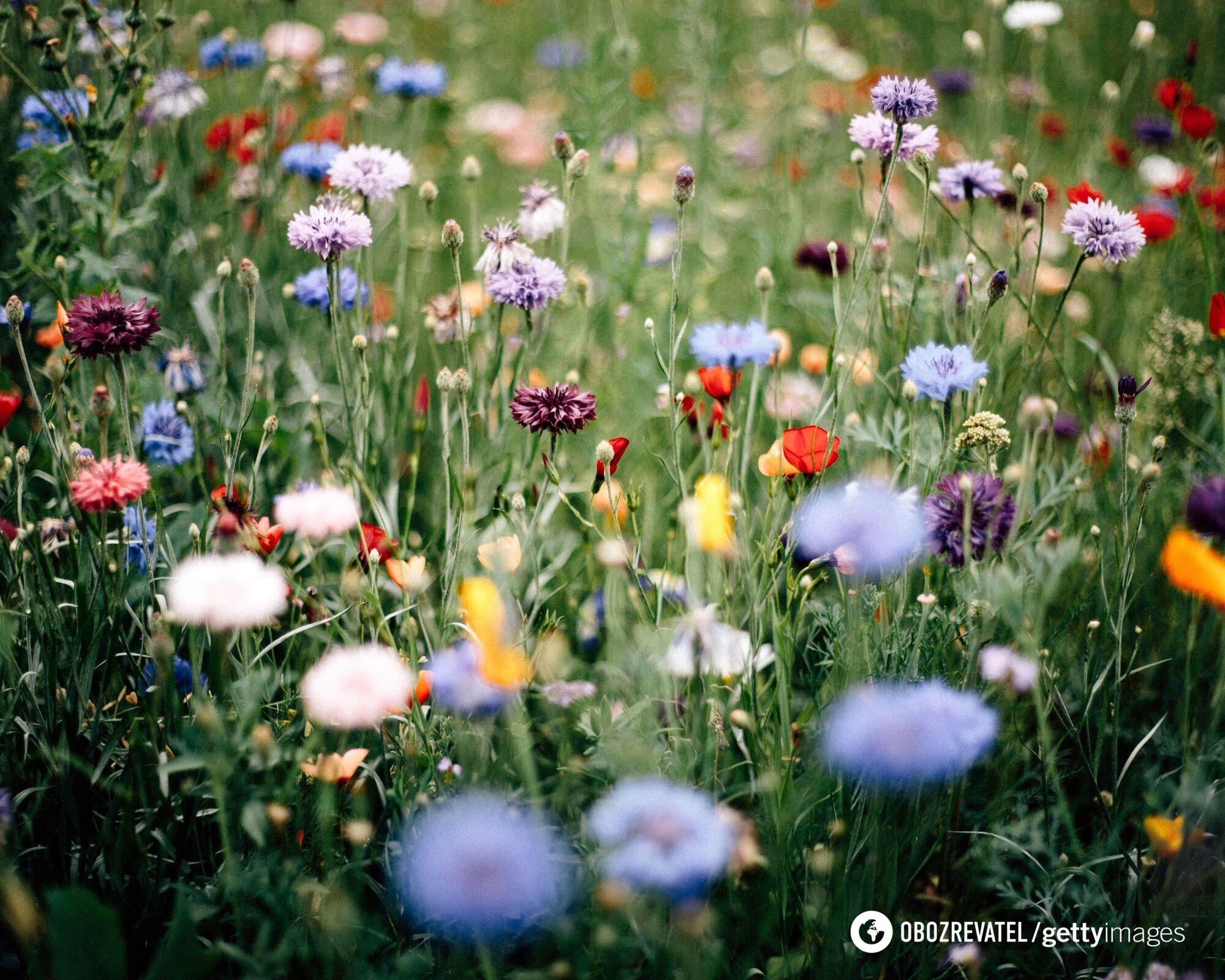 Настоящее лето в Украине ожидается с 25 мая.