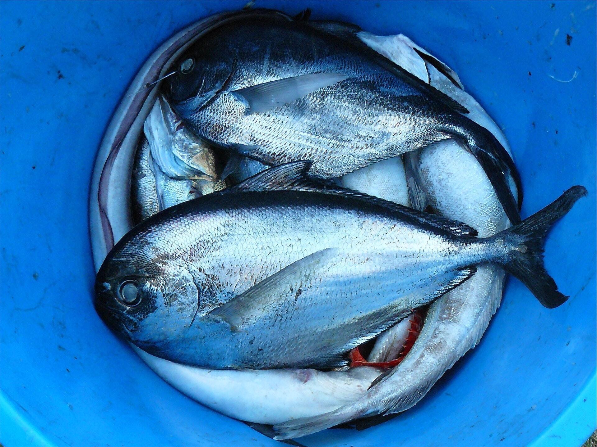 До вибору риби потрібно підходити з особливою уважністю