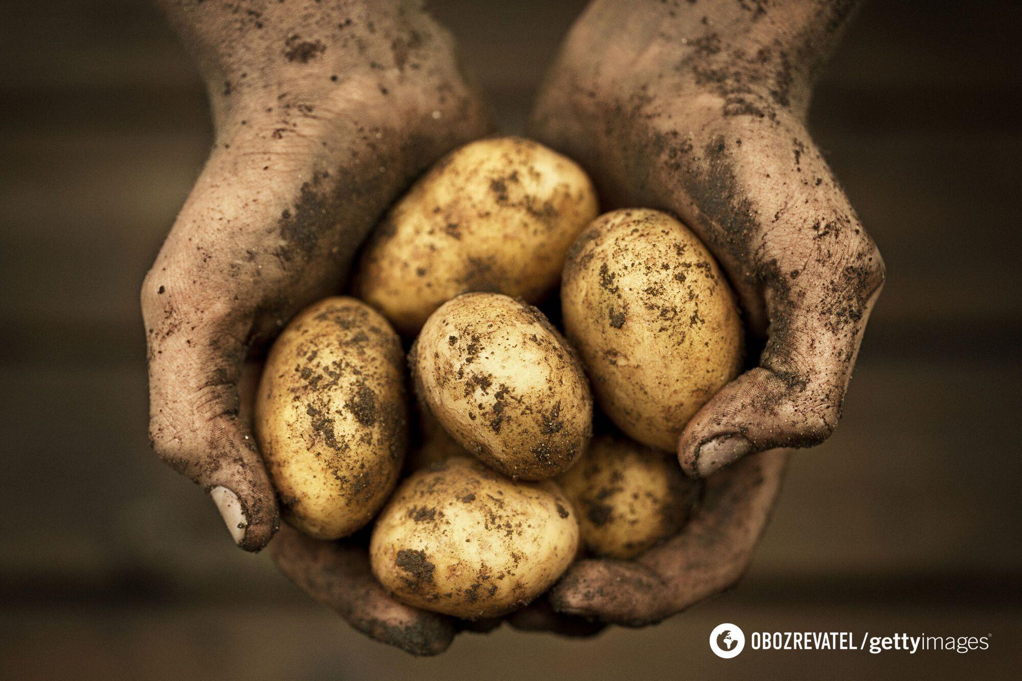 Картоплю можна почистити металевою щіткою