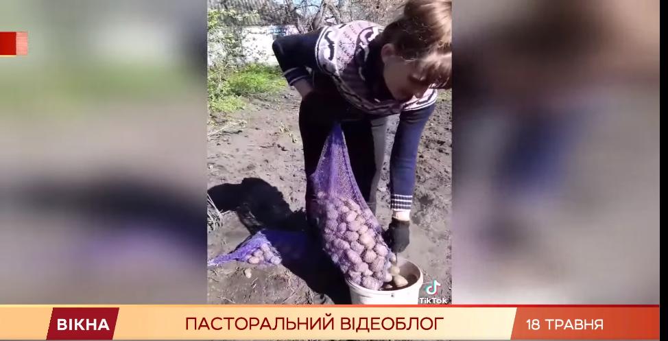 Даша показує, як садить картоплю