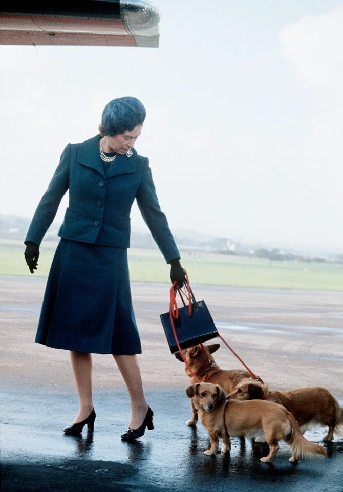 Около десяти лет назад у Елизаветы было 14 собак различных пород