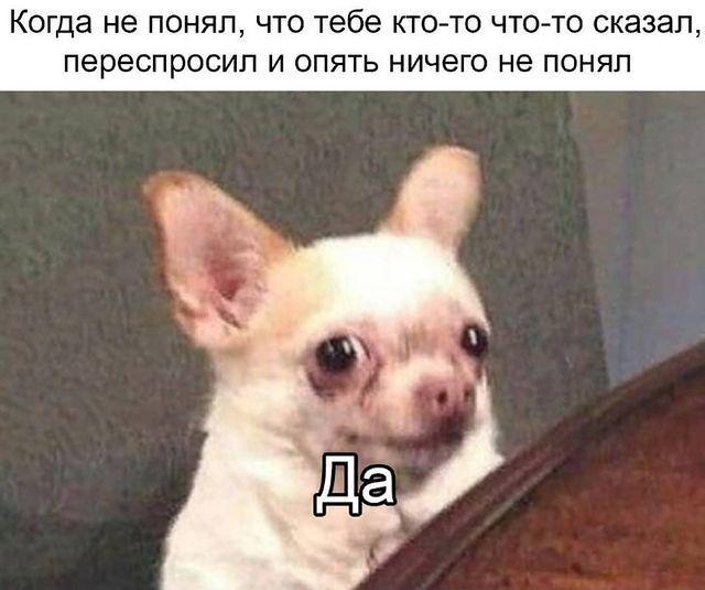 Мем з псом