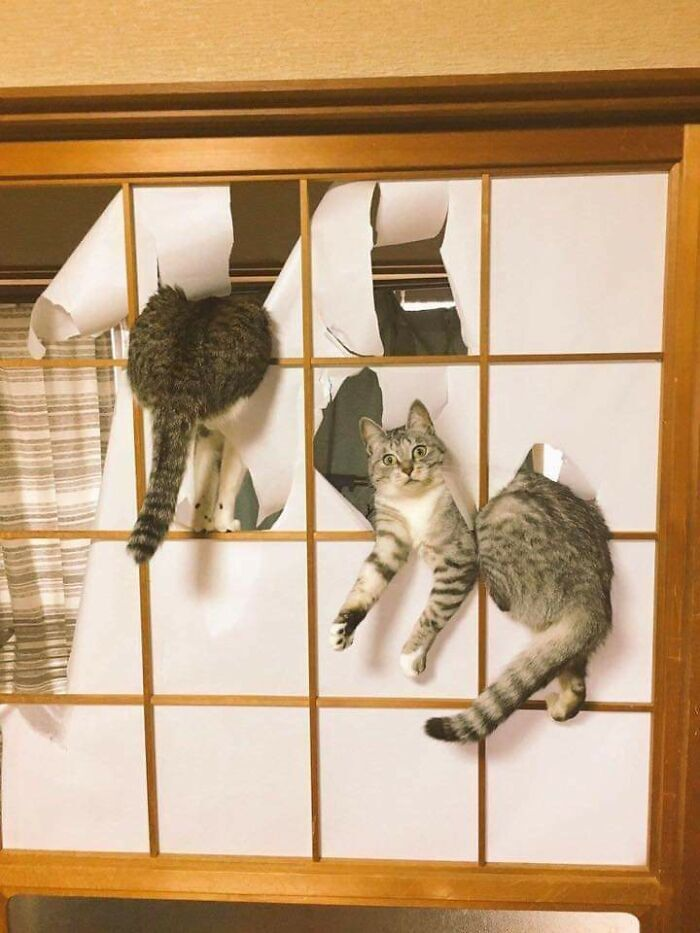 Коти приготували господарям сюрприз