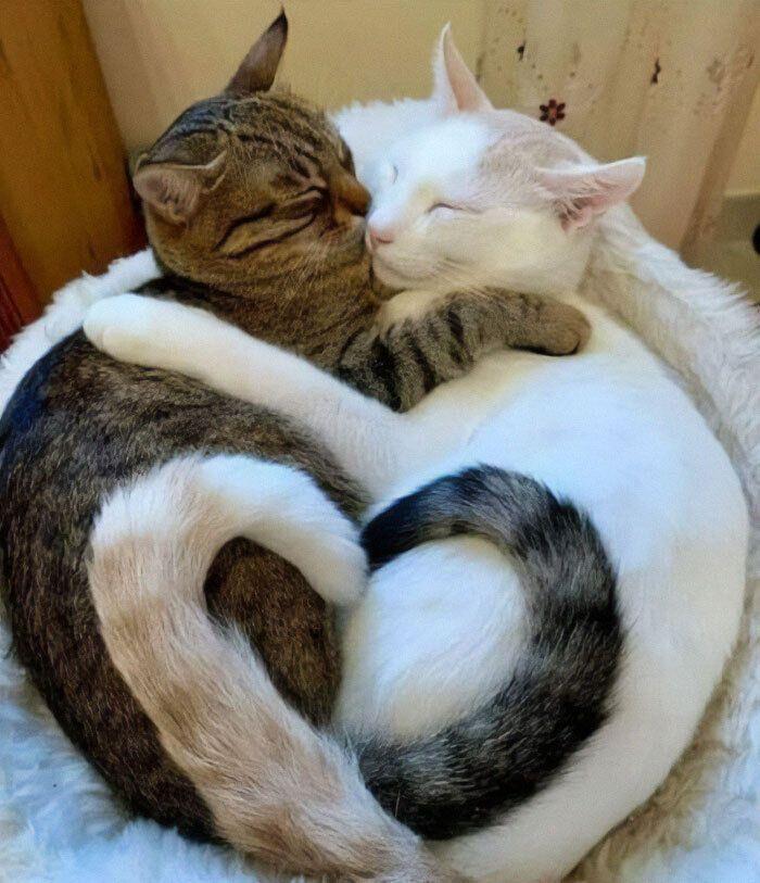 Одне серце на двох котиків