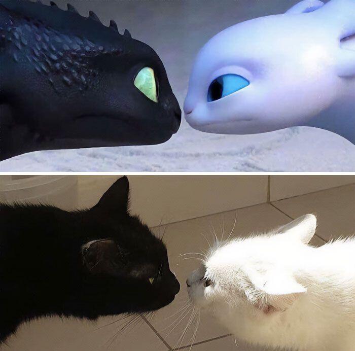 Закохані котики схожі на героїв мультфільму