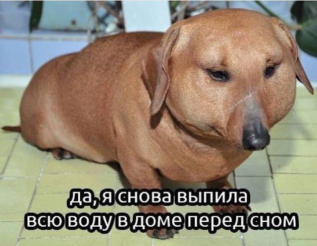Мем з собакою