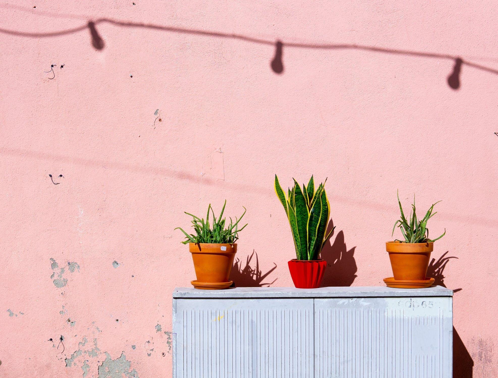 Кімнатні рослини подобаються не всім
