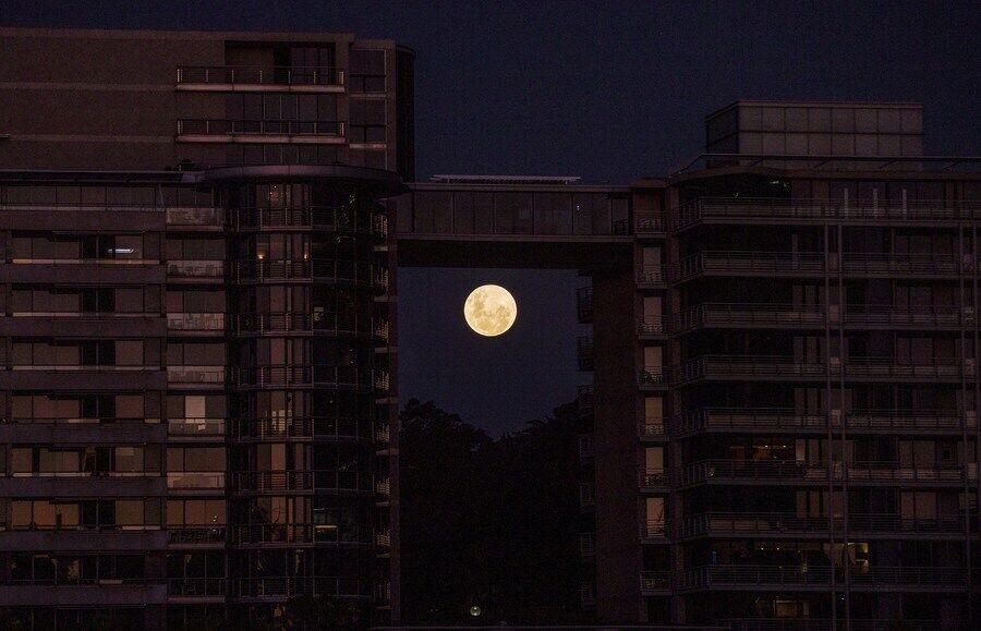 Кривавий місяць було видно над Сіднеєм