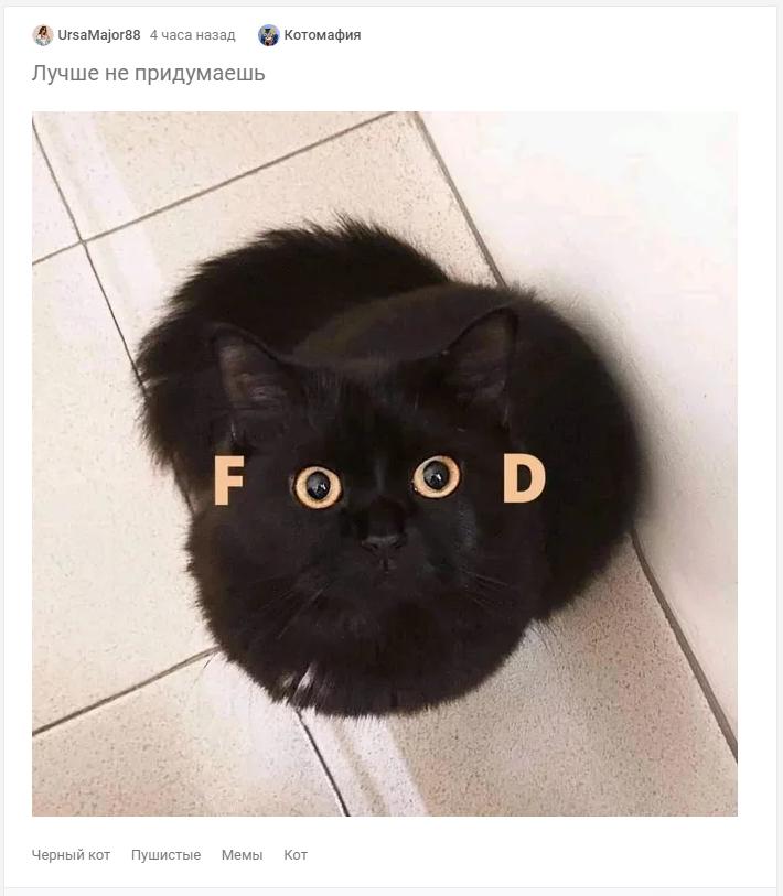 Мем з котом