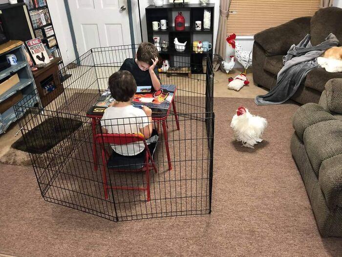 Курка поводить себе краще, ніж діти