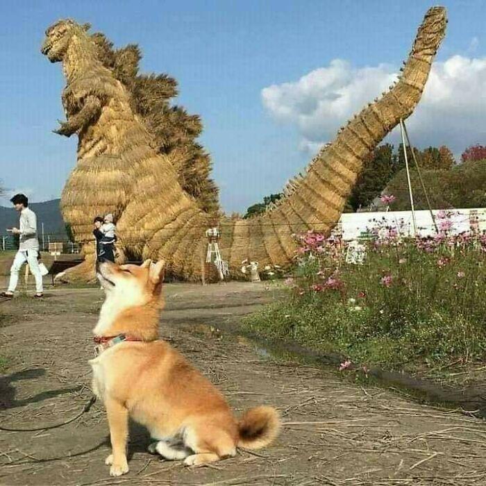 Гордий пес позує на камеру