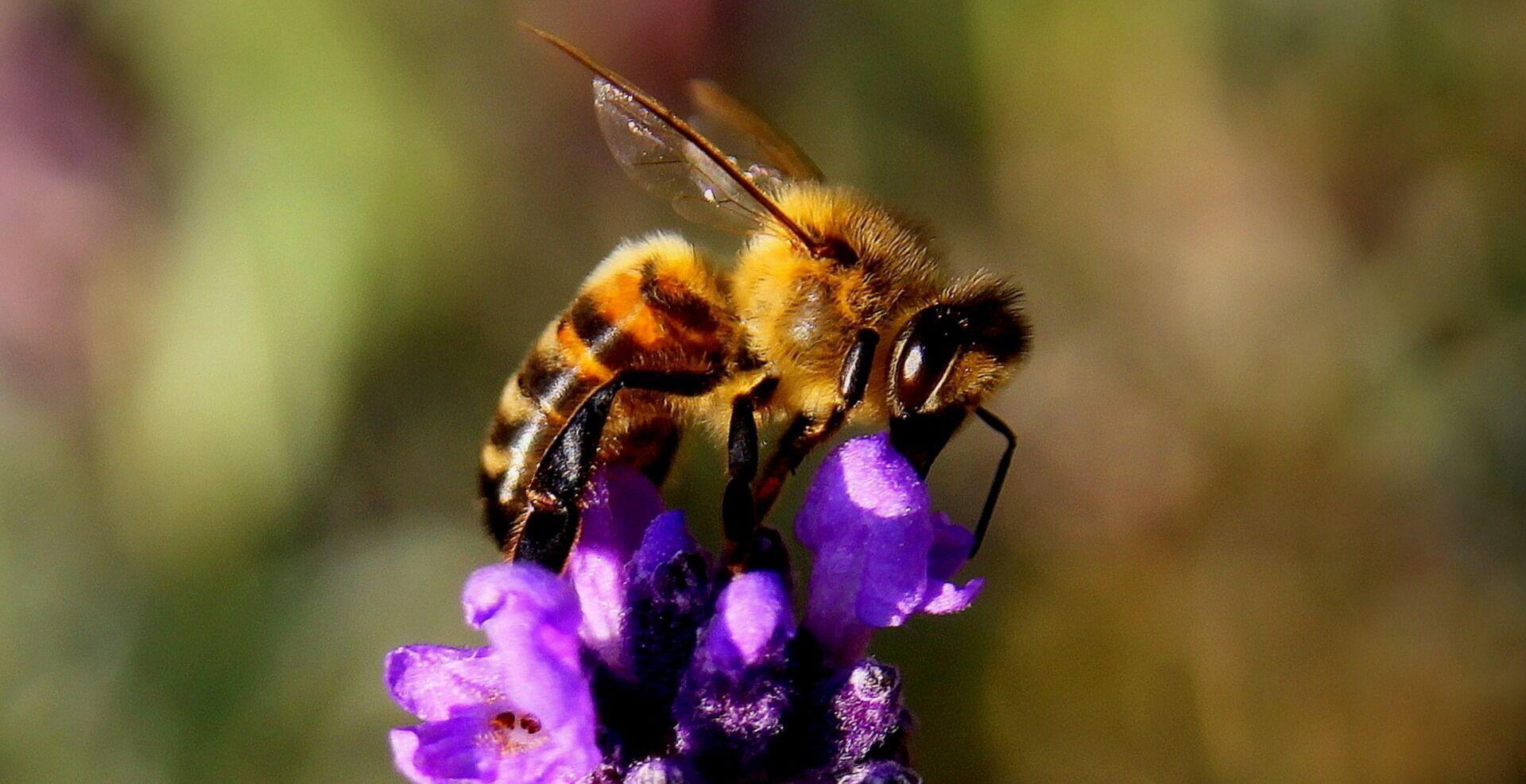 Лучшее средство от укусов пчел – профилактика