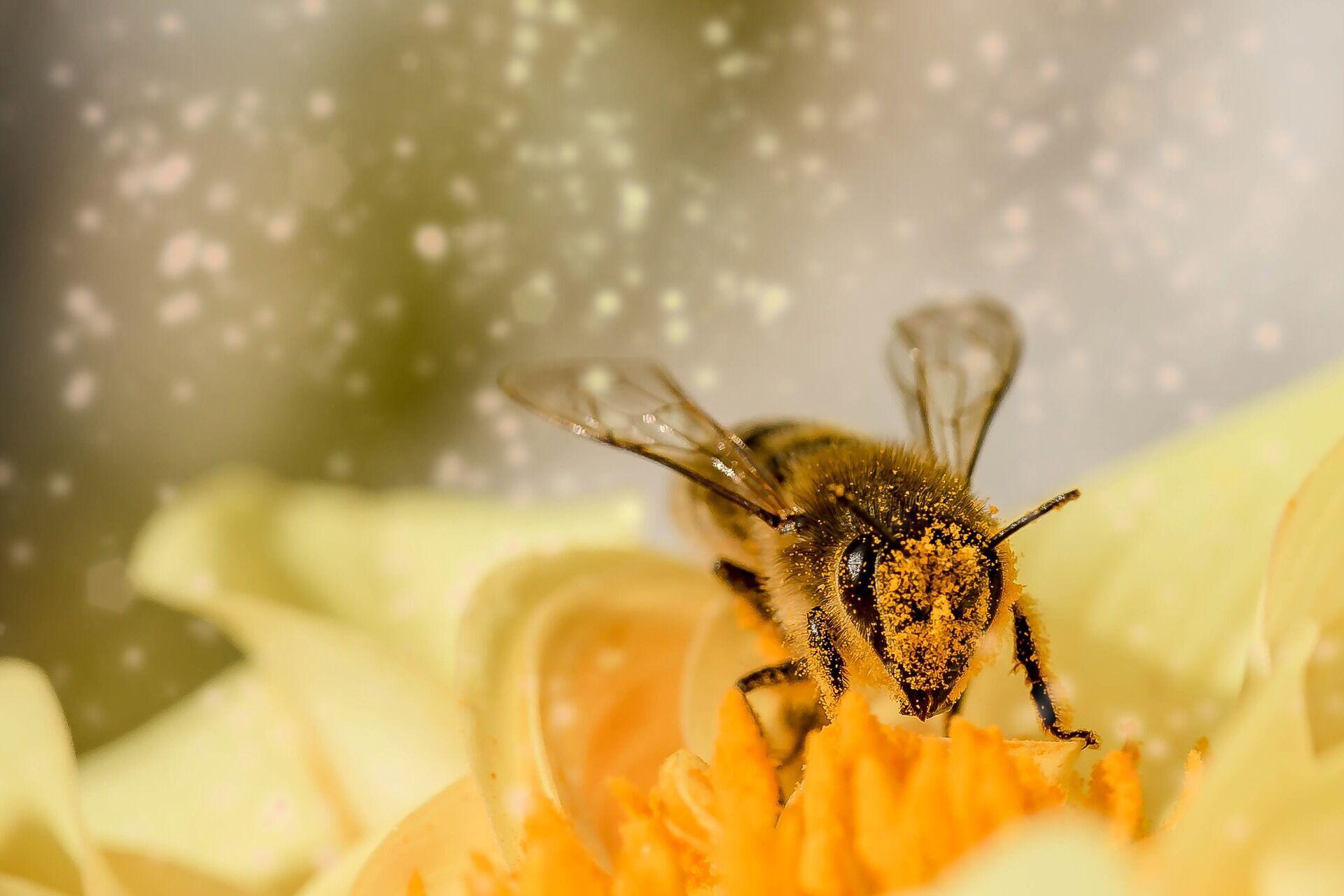 Лучший метод лечения укусов пчел – промыть место укуса и наложить холодный компресс