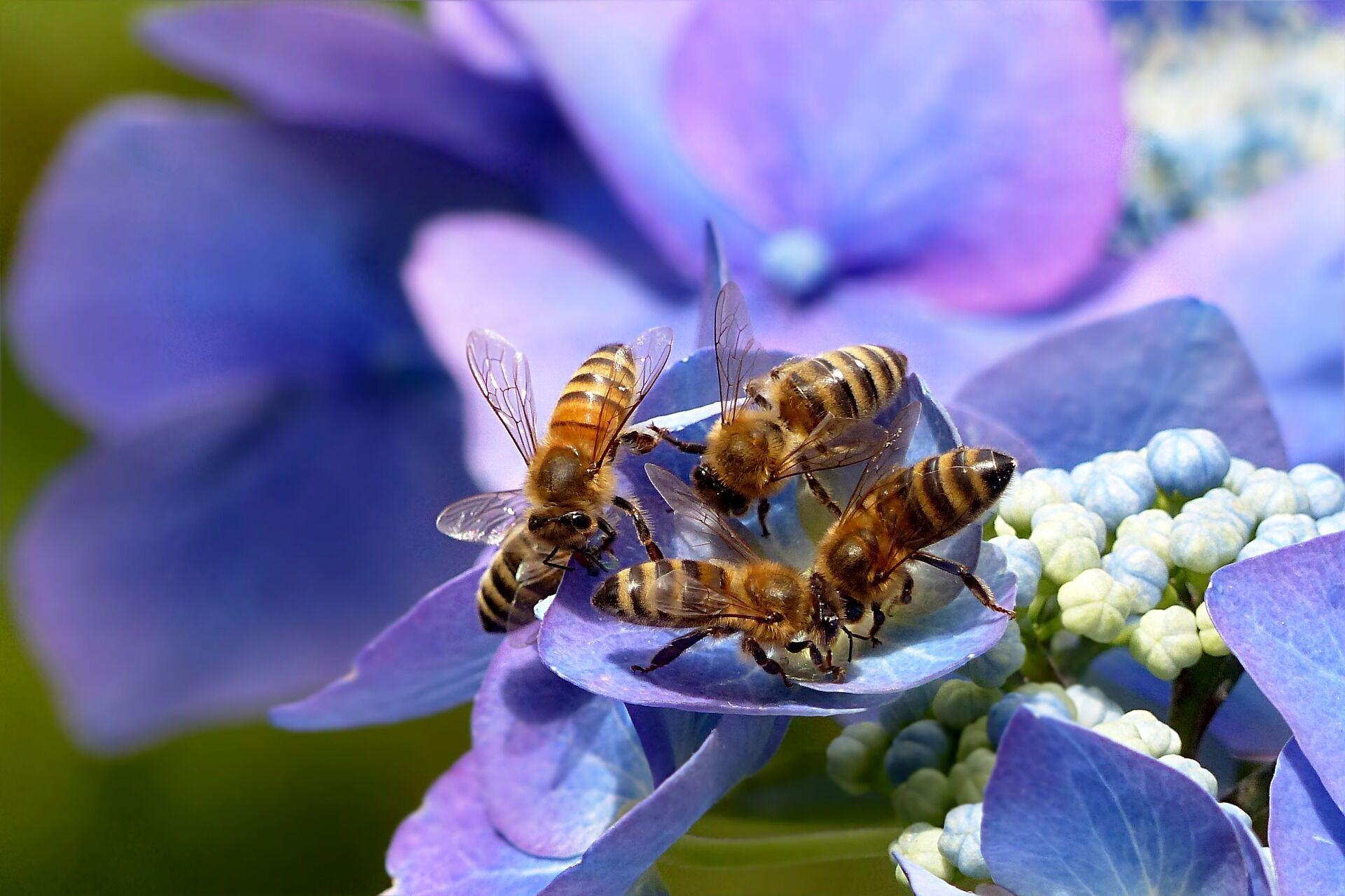 Большинство укусов пчел – это всего лишь раздражение, которое можно лечить дома
