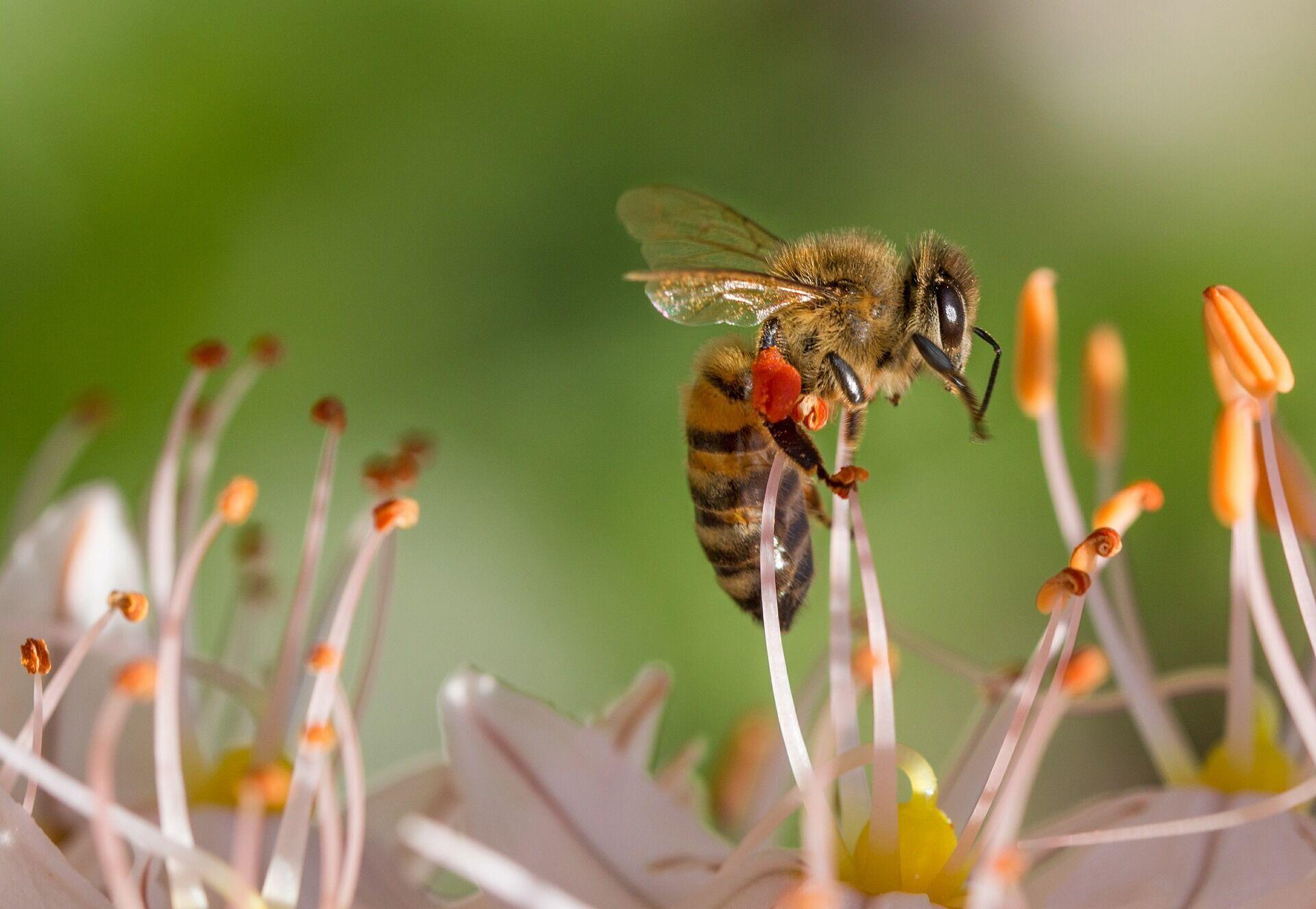 В особо тяжелых случаях укус пчелы может вызвать анафилаксию