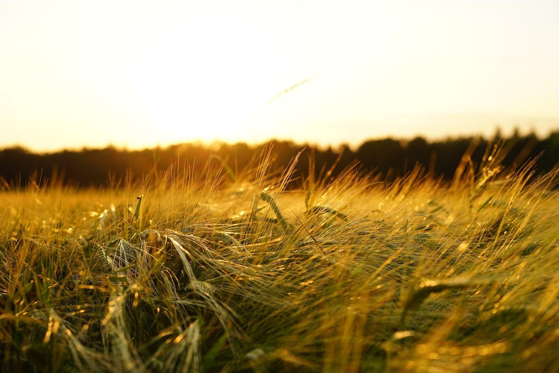29 травня в народі назвали днем Федора Житника, тому що цей день вважався вкрай сприятливим для посіву жита
